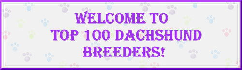 Miniature Dachshund Breeders and Kennels